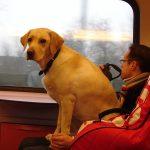 Отправляемся в отпуск с домашними животными